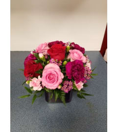 Beautiful Roses for any Occasion