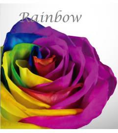 Specialty Roses - One Dozen Rainbow Roses Arrangement