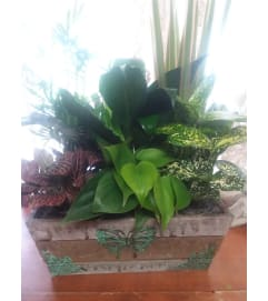 Butterfly Dish Garden Box