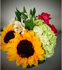 Sunflower Bliss1