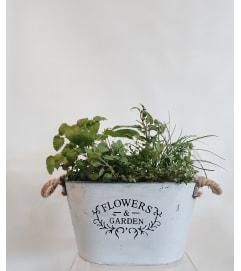 Gourmet Herb Garden