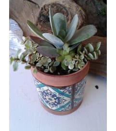 4 Inch Succulent Combo