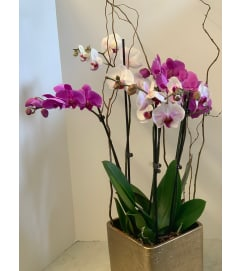 DIFFERENT ORCHIDS
