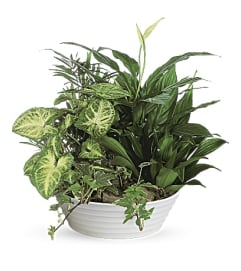 Medium Green Plant Dish Garden