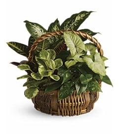 Emerald Garden Gift Basket