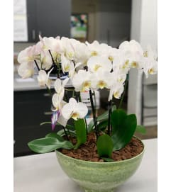 PURE ORCHIDS