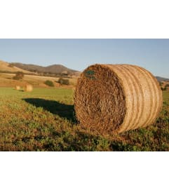 hay round bales