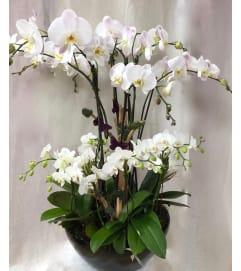 Orchid's garden
