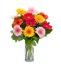 Grand Gerbera by Country Gardens