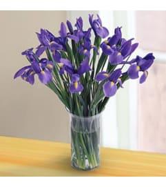 Irresistible Iris