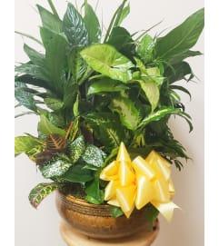 Premium Ceramic Dish Garden