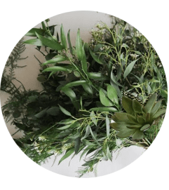 Abundant Foliage