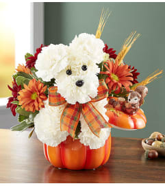 DOG FOR FALL