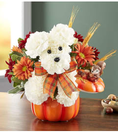 A-dog-able for Fall in Pumpkin