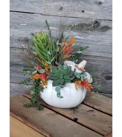 Autumn Succulents
