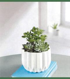 Modern Succulent Garden Bouquet