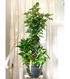 Large Assorted Foliage Planter