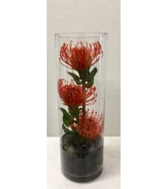 Protea Trio in Cylinder