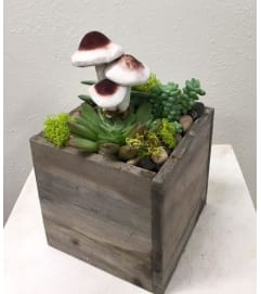 Succulent Garden in Wood Box