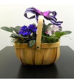 African Violet in Basket