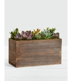 Succulents Garden Box