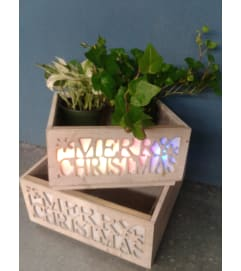 Merry Christmas Box Plant Holder