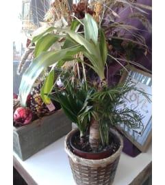 Combo Plant 6