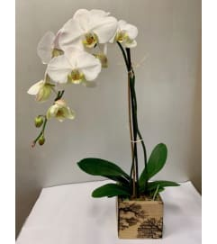 White Orchid in Lichtenberg Designed Box