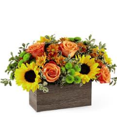Happy Harvest Box