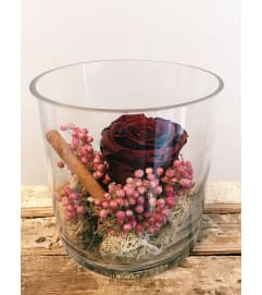 Preserved Rose (Burgundy)