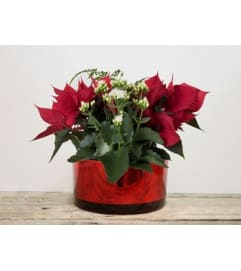 Red glass Christmas planter