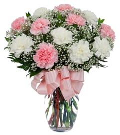 Pretty Carnations 19