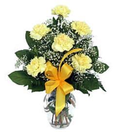 6 Yellow Carnations 19