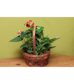 Mixed Planter Basket with Anthurium
