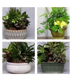 Planter-Florist's Choice in Pottery