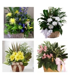 Florists/Choice-Planter in wicker with fresh added
