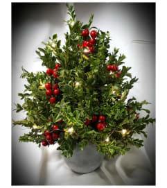 o'Christmas Tree o'Christmas tree