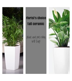 Palm/Peace Lily