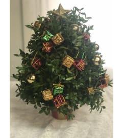 Merry Christmas Boxwood Tree