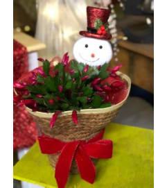 Christmas Cactus 1