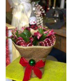 Christmas Cactus #3