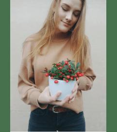 Winter Berry Plant