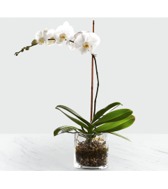 White Orchid Planter 2020