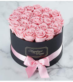 Fresh Boxed Pink Roses