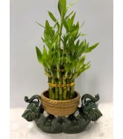 Lucky Bamboo Lying Elephant Planter
