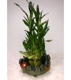 Lucky Bamboo Planter
