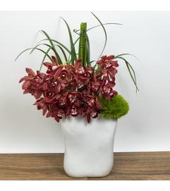 Orchid Miami