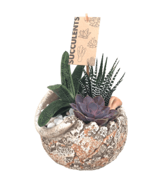 Antique Succulent Garden