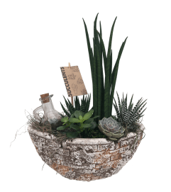 Succulent Antique Oval Garden