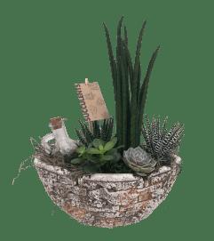 Succulent Antique Oval Garden
